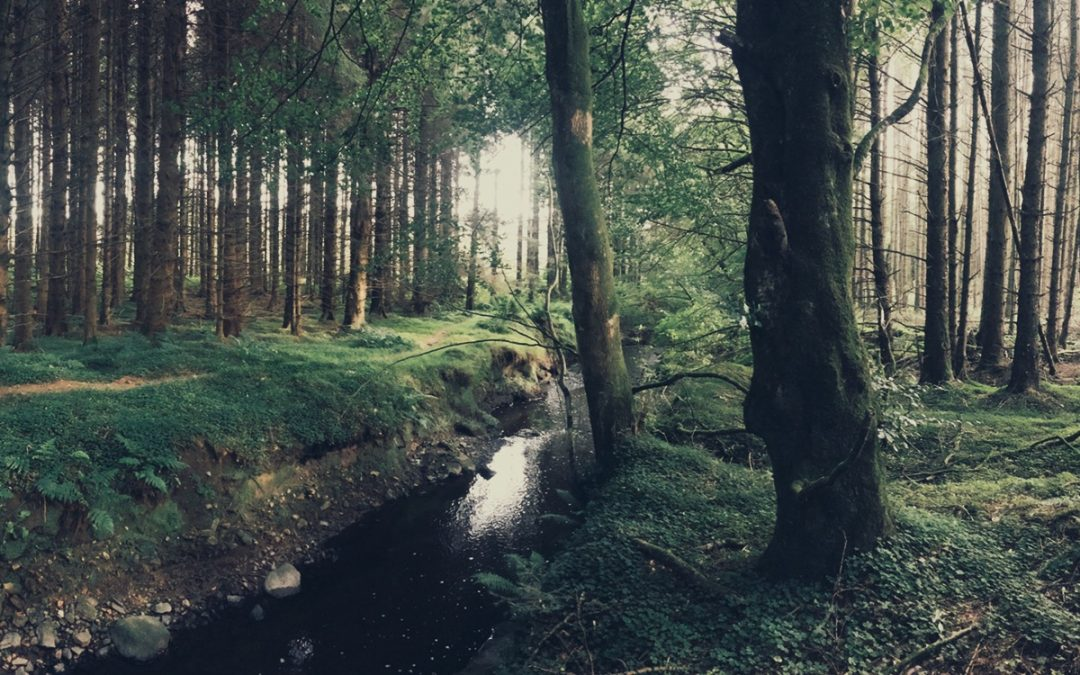 Thoughts from the Enchanted Pomeroy Forest